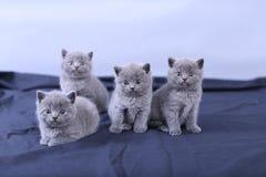 Μικρά γατάκια σε ένα μπλε υπόβαθρο Στοκ εικόνα με δικαίωμα ελεύθερης χρήσης