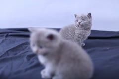 Μικρά γατάκια σε ένα μπλε υπόβαθρο Στοκ Εικόνες