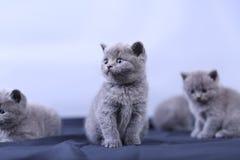 Μικρά γατάκια σε ένα μπλε υπόβαθρο Στοκ εικόνες με δικαίωμα ελεύθερης χρήσης