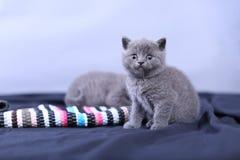 Μικρά γατάκια σε ένα μπλε υπόβαθρο Στοκ φωτογραφίες με δικαίωμα ελεύθερης χρήσης