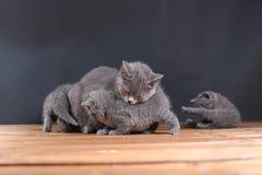 Μικρά γατάκια σε ένα ξύλινο υπόβαθρο Στοκ εικόνα με δικαίωμα ελεύθερης χρήσης