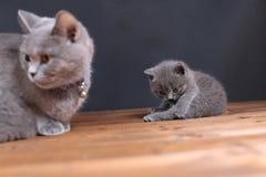 Μικρά γατάκια σε ένα ξύλινο υπόβαθρο Στοκ Εικόνα