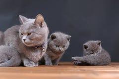 Μικρά γατάκια σε ένα ξύλινο υπόβαθρο Στοκ φωτογραφία με δικαίωμα ελεύθερης χρήσης