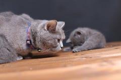 Μικρά γατάκια σε ένα ξύλινο υπόβαθρο Στοκ εικόνες με δικαίωμα ελεύθερης χρήσης