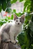 Μικρά γατάκια το καλοκαίρι εκτός από τις πράσινες εγκαταστάσεις στοκ φωτογραφίες με δικαίωμα ελεύθερης χρήσης