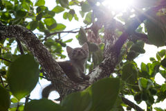 Μικρά γατάκια το καλοκαίρι εκτός από τις πράσινες εγκαταστάσεις Στοκ Φωτογραφία