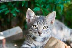 Μικρά γατάκια το καλοκαίρι εκτός από τις πράσινες εγκαταστάσεις στοκ εικόνα με δικαίωμα ελεύθερης χρήσης