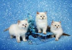 Μικρά γατάκια τρίο στο έλκηθρο και το χριστουγεννιάτικο δέντρο στοκ εικόνες με δικαίωμα ελεύθερης χρήσης
