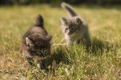Μικρά γατάκια Στοκ εικόνα με δικαίωμα ελεύθερης χρήσης
