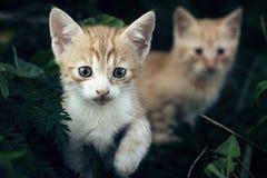Μικρά γατάκια Στοκ Εικόνες