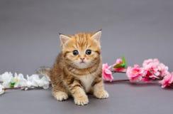 Μικρά γατάκι και aflowers Στοκ Φωτογραφίες