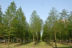 μικρά δάση Στοκ Φωτογραφίες