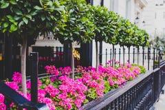 Μικρά δέντρα και συνθέσεις λουλουδιών έξω από το κομψό κτήριο Στοκ Φωτογραφίες