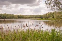 μικρά δέντρα καλάμων λιμνών Στοκ Φωτογραφίες