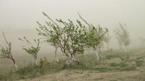 Μικρά δέντρα που φυσούν στο ισχυρό άνεμο απόθεμα βίντεο