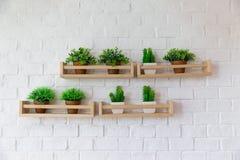 Μικρά δοχεία εγκαταστάσεων που τοποθετούνται στο ξύλινο ράφι στον άσπρο τοίχο birck στοκ εικόνα με δικαίωμα ελεύθερης χρήσης
