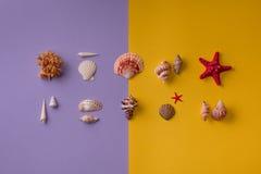 Μικρά διακοσμητικά θαλασσινά κοχύλια στο δονούμενο υπόβαθρο Στοκ φωτογραφίες με δικαίωμα ελεύθερης χρήσης
