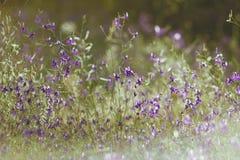 Μικρά ιώδη λουλούδια Στοκ Εικόνες