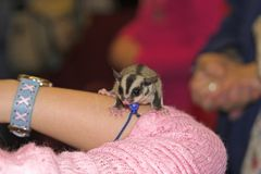 μικρά κατοικίδια ζώα Στοκ εικόνες με δικαίωμα ελεύθερης χρήσης
