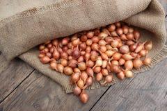 Μικρά κρεμμύδια σε μια τσάντα Στοκ εικόνες με δικαίωμα ελεύθερης χρήσης