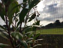 Μικρά λουλούδια δέντρων φραουλών στοκ εικόνα