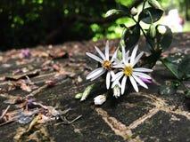 Μικρά λουλούδια στοκ εικόνες με δικαίωμα ελεύθερης χρήσης