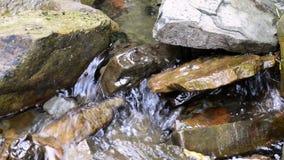 Μικρά ορμητικά σημεία ποταμού σε ένα ρεύμα βουνών φιλμ μικρού μήκους