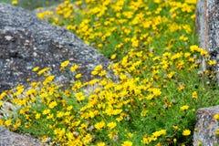 Μικρά λουλούδια στο βράχο στοκ εικόνες