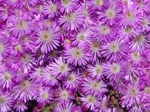 Μικρά λουλούδια στοκ εικόνα