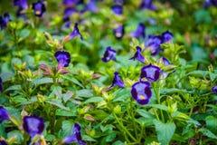 Μικρά λουλούδια Στοκ Εικόνες