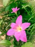 Μικρά λουλούδια στοκ φωτογραφία με δικαίωμα ελεύθερης χρήσης