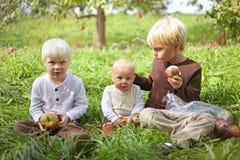Μικρά παιδιά που τρώνε τα φρούτα στον οπωρώνα της Apple Στοκ φωτογραφία με δικαίωμα ελεύθερης χρήσης