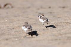 Μικρά πουλιά Στοκ Εικόνες