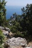 Μικρά πράσινα δέντρα στο υπόβαθρο της απεριόριστης Μαύρης Θάλασσας και των απότομων απότομων βράχων Στοκ Φωτογραφία