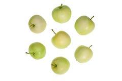 Μικρά πράσινα μήλα Στοκ φωτογραφία με δικαίωμα ελεύθερης χρήσης