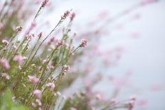 Μικρά ρόδινα λουλούδια 06b Στοκ Εικόνες