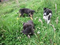 Μικρά σκυλιά στη φύση Στοκ εικόνα με δικαίωμα ελεύθερης χρήσης