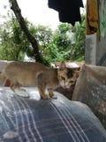 μικρά συμπαθητικά όμορφα μάτια γατακιών γατών στοκ φωτογραφίες με δικαίωμα ελεύθερης χρήσης