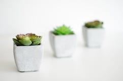 μικρά φυτά Στοκ φωτογραφίες με δικαίωμα ελεύθερης χρήσης