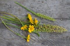 Μικρά χαριτωμένα λουλούδια στο γκρίζο ξύλο Στοκ Φωτογραφίες