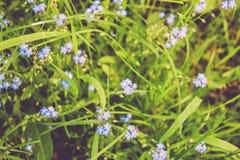 Μικρά χαριτωμένα λουλούδια Στοκ φωτογραφία με δικαίωμα ελεύθερης χρήσης