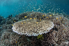 Μικρά ψάρια επάνω από τα κοράλλια στοκ φωτογραφία με δικαίωμα ελεύθερης χρήσης