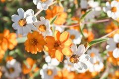 Μικρά όμορφα λουλούδια Στοκ Εικόνες