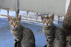 Μικρά kidys που περιμένουν το μεσημεριανό γεύμα, μικρές γάτες στοκ εικόνα