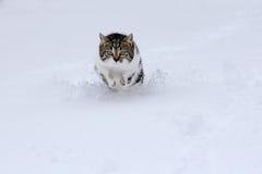 Μικρές αναπηδήσεις γατών ευτυχώς μέσω του χιονιού το χειμώνα Στοκ φωτογραφίες με δικαίωμα ελεύθερης χρήσης