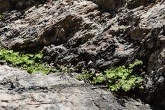Μικρές εγκαταστάσεις που γεννήθηκαν στις ρωγμές βράχου στοκ εικόνες με δικαίωμα ελεύθερης χρήσης