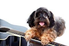 Μικρές διακοσμητικές doggie και κιθάρα. Στοκ φωτογραφία με δικαίωμα ελεύθερης χρήσης