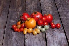 Μικρές και μεγάλες ντομάτες ντοματών, κόκκινο, κίτρινος και πράσινος Στοκ Εικόνα