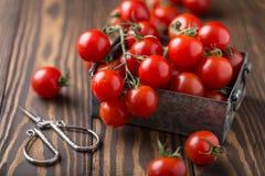 Μικρές κόκκινες ντομάτες κερασιών στο αγροτικό υπόβαθρο Ντομάτες κερασιών στην άμπελο Στοκ εικόνα με δικαίωμα ελεύθερης χρήσης