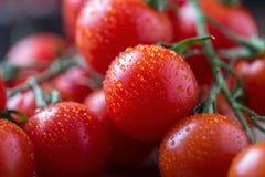 Μικρές κόκκινες ντομάτες κερασιών στο αγροτικό υπόβαθρο Ντομάτες κερασιών στην άμπελο Στοκ Εικόνα